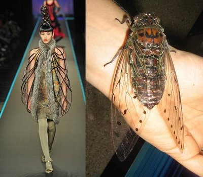 jean-paul-insect