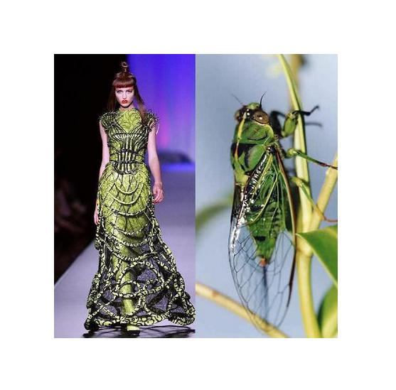 Insektsinspiration